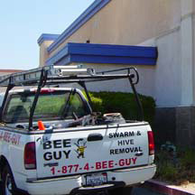 San Diego Bee Removal Guys Service Truck